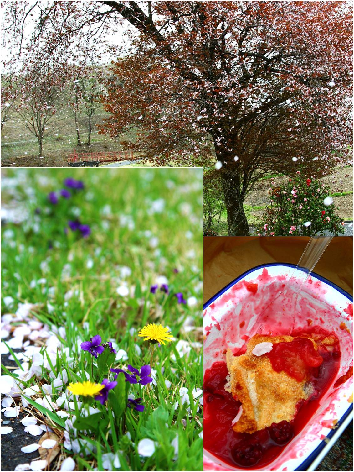 ピクニック in 桜吹雪_a0107981_15291457.jpg
