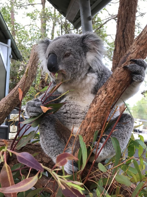 オーストラリア旅行完結_f0329091_16502893.jpg