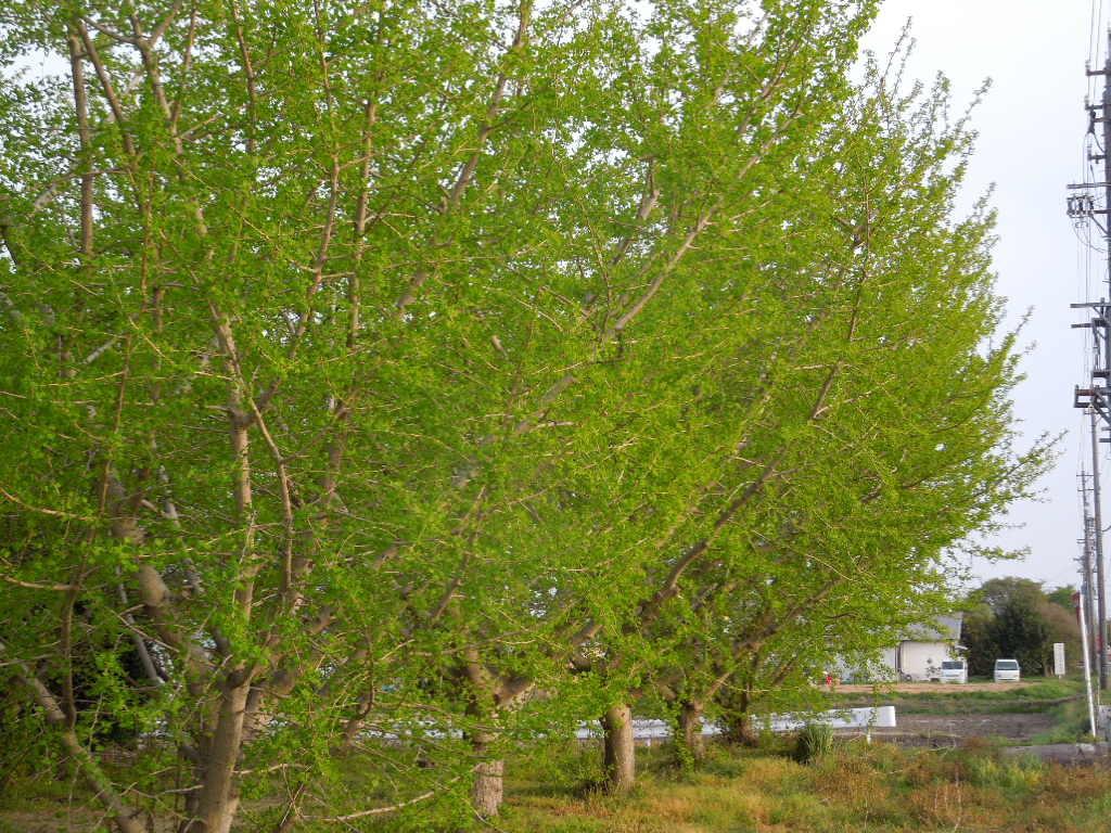「木の芽時」_a0120513_19025420.jpg