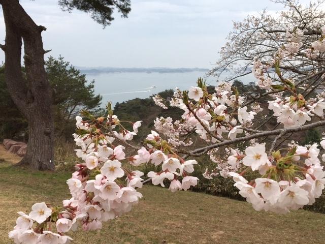 松島と桜_d0171222_08372857.jpg