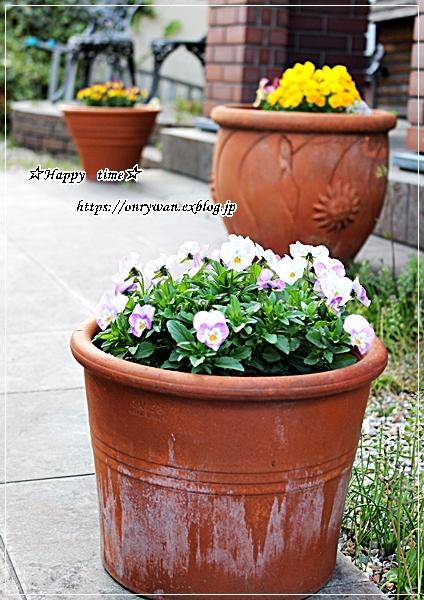 ソースチキンカツ弁当と庭からビオラとイチゴ酵母でラウンドパン♪_f0348032_18343940.jpg