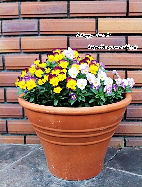 ソースチキンカツ弁当と庭からビオラとイチゴ酵母でラウンドパン♪_f0348032_18345233.jpg