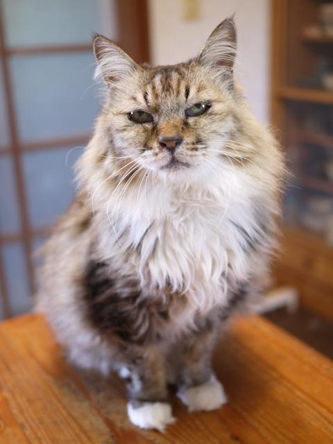 猫のお留守番 ライオンちゃん編。_a0143140_01445027.jpg