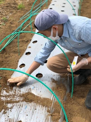 蔓なしインゲン豆 蔓ありインゲン豆 直播きします 今朝はTさんが参加_c0222448_12042635.jpg