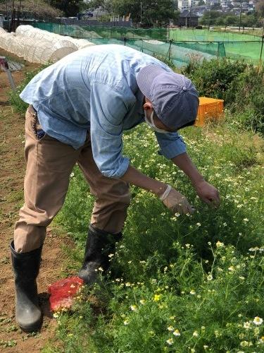 蔓なしインゲン豆 蔓ありインゲン豆 直播きします 今朝はTさんが参加_c0222448_12045748.jpg