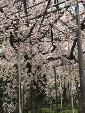 お花見日和_b0341759_17591471.jpg