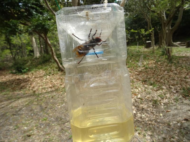 スズメバチの駆除器(とらっぷ)を設置した・・・うみべの森_c0108460_20554819.jpg
