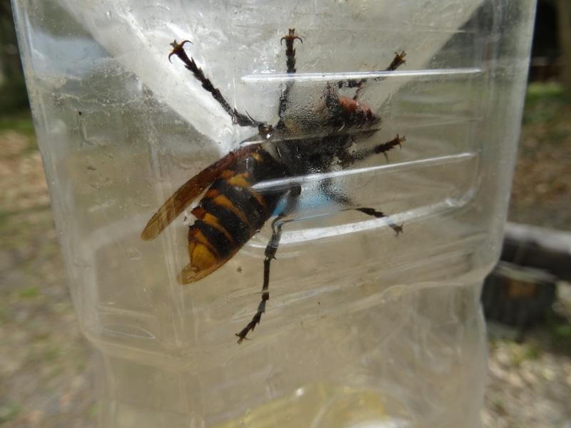 スズメバチの駆除器(とらっぷ)を設置した・・・うみべの森_c0108460_20554997.jpg