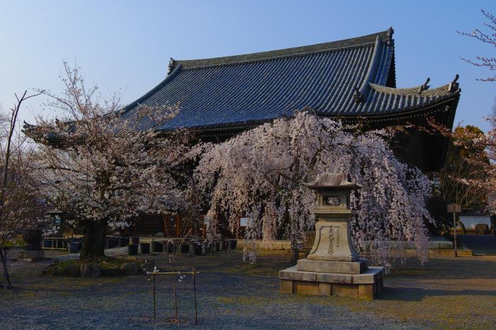 京都 桜2018立本寺_f0021869_00174751.jpg