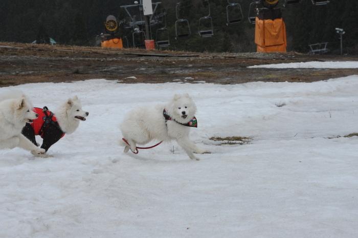 ゲレンデ雪遊び_a0049296_18342121.jpg