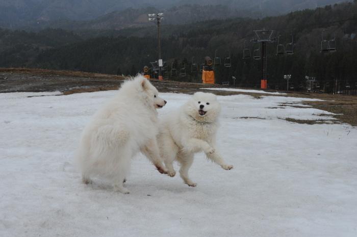 ゲレンデ雪遊び_a0049296_18474269.jpg
