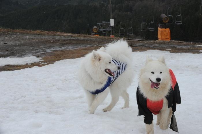 ゲレンデ雪遊び_a0049296_18512172.jpg