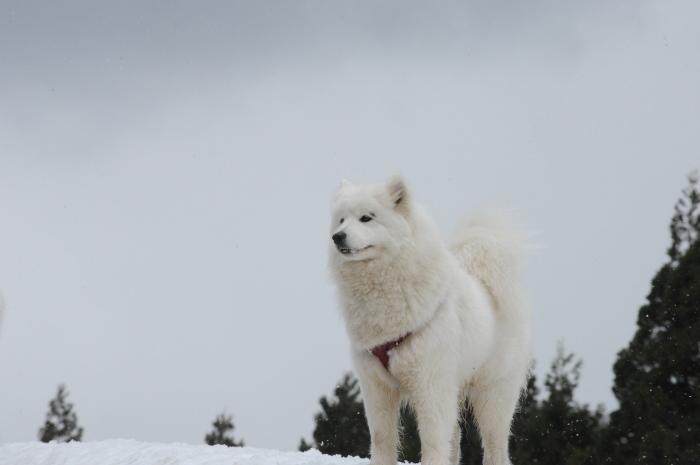 ゲレンデ雪遊び_a0049296_19011480.jpg