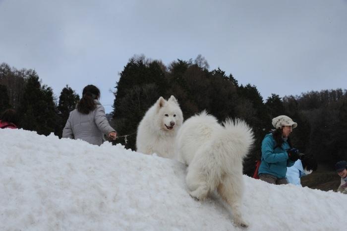 ゲレンデ雪遊び_a0049296_19045000.jpg