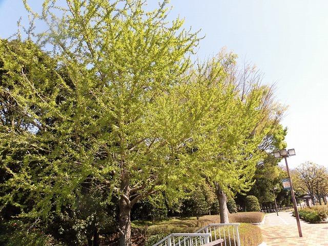 「新緑」が間近? いやもう来ている! 春の「緑と花の百科展」_f0141310_07340664.jpg