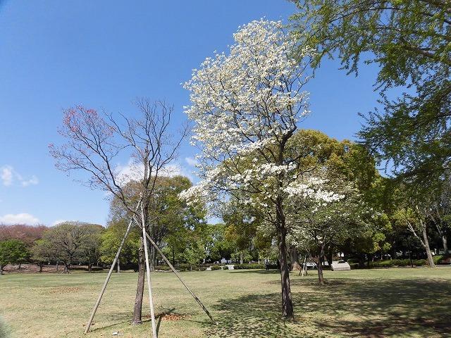 「新緑」が間近? いやもう来ている! 春の「緑と花の百科展」_f0141310_07351281.jpg