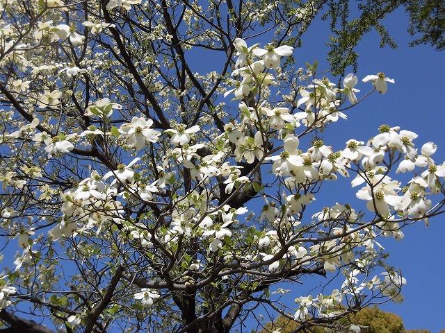 「新緑」が間近? いやもう来ている! 春の「緑と花の百科展」_f0141310_07352220.jpg