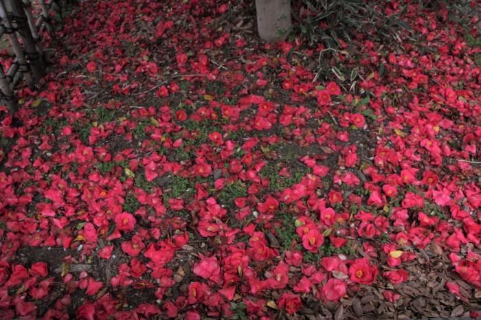 春の痕跡_d0150720_17222064.jpg