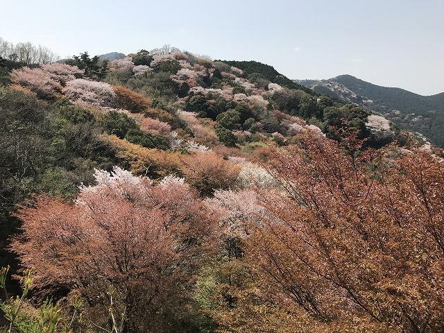 大岩の桜_d0177220_14211549.jpg