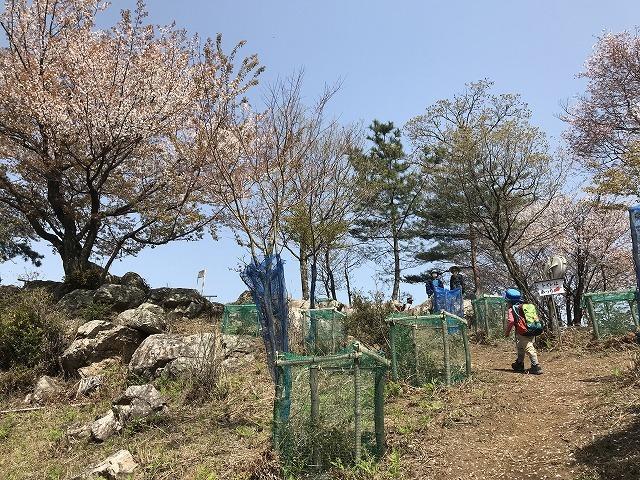 大岩の桜_d0177220_14211724.jpg