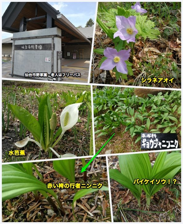 散歩・仙台野草園_c0063348_08440879.jpg