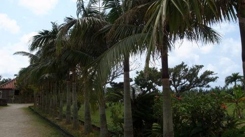 石垣島観光  石垣やいま村、リスザルの森、唐人墓、_c0011649_12180956.jpg