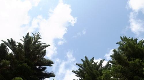石垣島観光  石垣やいま村、リスザルの森、唐人墓、_c0011649_12333463.jpg