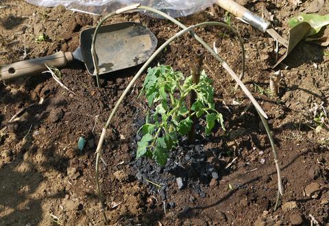 トマト、ナス、ピーマンの苗など4日連続植え付け4・9~12_c0014967_21272323.jpg