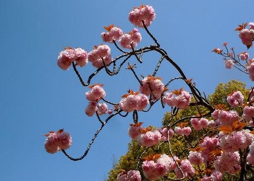 路傍の花、樹々の鳥(206) ~ 続・サクラのあとは ・・・ ~ _b0102572_22501426.jpg