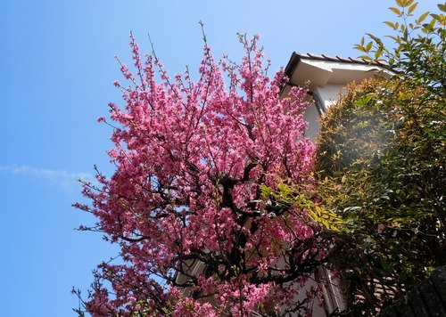 路傍の花、樹々の鳥(206) ~ 続・サクラのあとは ・・・ ~ _b0102572_22505825.jpg