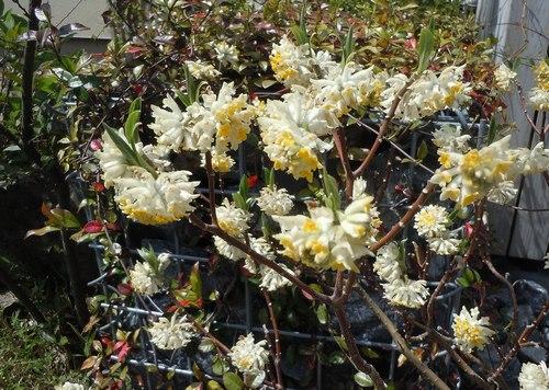 路傍の花、樹々の鳥(206) ~ 続・サクラのあとは ・・・ ~ _b0102572_22511774.jpg