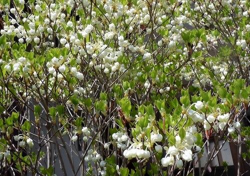 路傍の花、樹々の鳥(206) ~ 続・サクラのあとは ・・・ ~ _b0102572_22513385.jpg