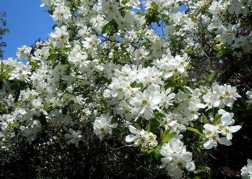 路傍の花、樹々の鳥(206) ~ 続・サクラのあとは ・・・ ~ _b0102572_225242.jpg