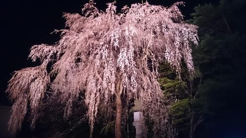 新潟にて_e0040673_1212205.jpg
