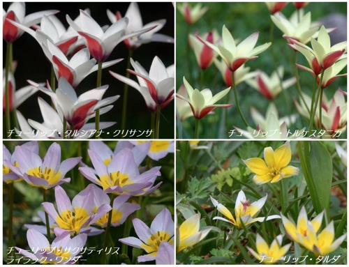 地元公園の春の植物たち_a0204089_6134989.jpg