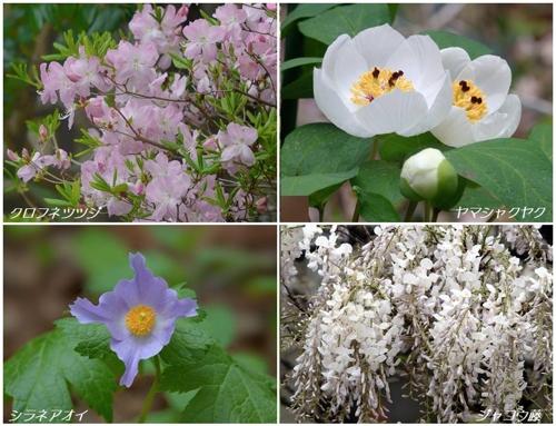 地元公園の春の植物たち_a0204089_6135880.jpg