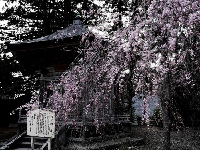 国上寺のしだれ桜_e0169421_21245546.jpg