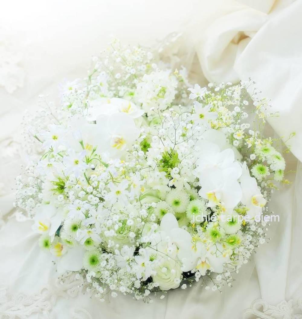 花のギフト お供えのお花として 胡蝶蘭とカスミソウのアレンジ_a0042928_13112713.jpg