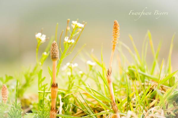 春の坊や **_d0344864_19123142.jpg