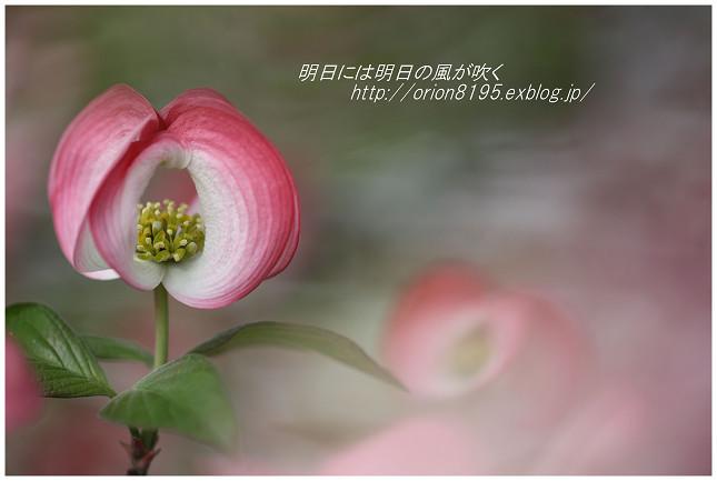 f0361079_20424576.jpg