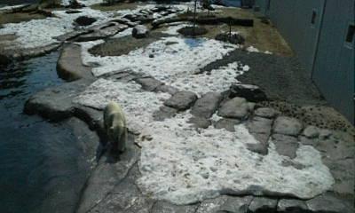 円山動物園へ_f0078286_10020491.jpg
