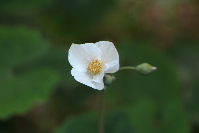 庭の花々_d0150720_16040684.jpg