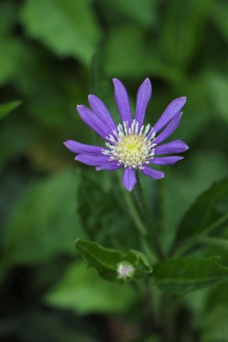 庭の花々_d0150720_16051341.jpg