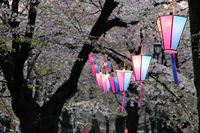 桜で繋がる人々の輪 もっと広がれ~!!_d0150720_16405252.jpg