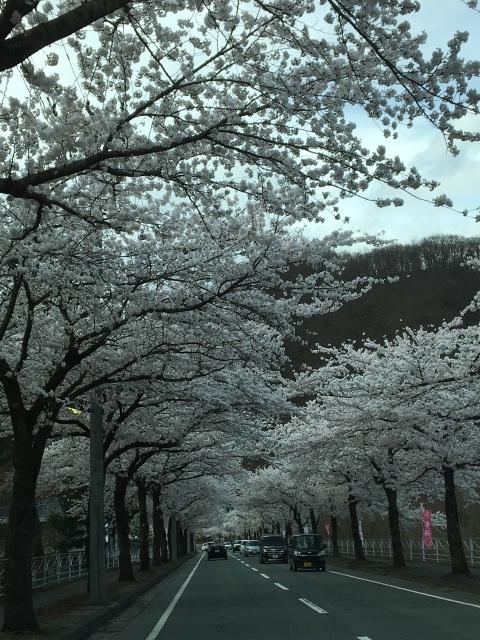 散りゆく桜も美しい_d0171222_14005881.jpg