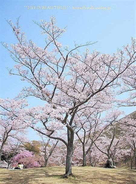 伊豆高原さくらの里_d0083623_1730868.jpg