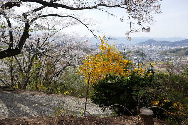 桜 (三春、花見山)_b0249247_09320057.jpg