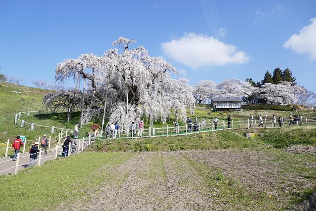 桜 (三春、花見山)_b0249247_09324798.jpg