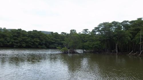 西表島(いりおもて)観光  仲間川マングローブ・遊覧クルーズ_c0011649_23480052.jpg