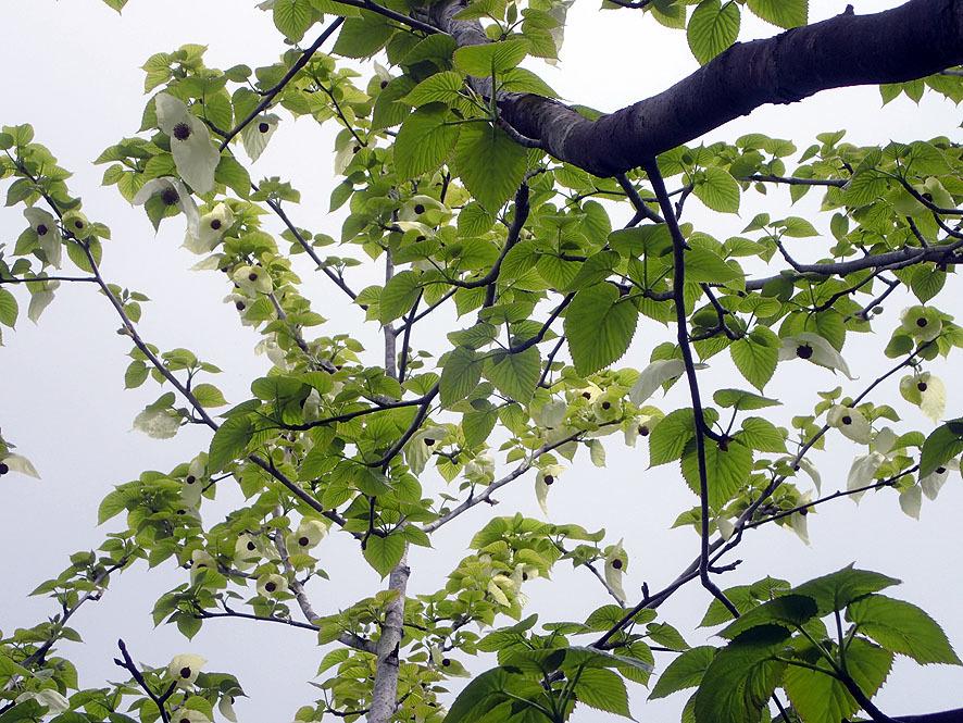 f0131669_20030321.jpg